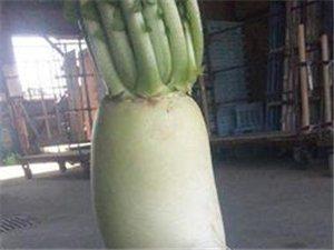 看看这些奇葩的萝卜怎么长的呢