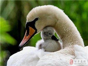 动物的母爱