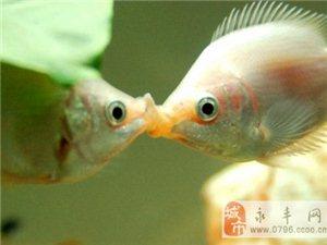 原�恚�接吻有�@么多好�?差一�c白活了!