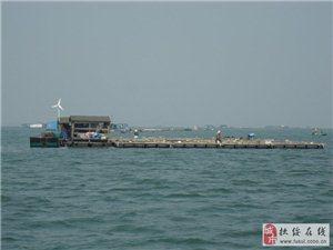 报名贴:2014.5月17日(本周六),骑行南万码头,吹海风,体验渔家