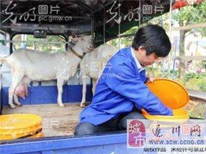 遂川:羊奶街�^�F�D�F�u