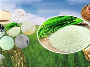 纯天然香米私人定制,香稻育种专家汤俭民团队倾心打理,赶快抢定吧!