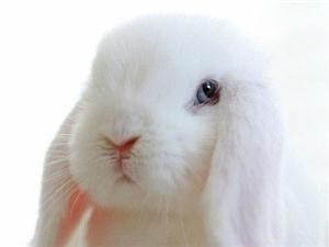 呆萌小白兔,有�]有迷到你!!!呆萌兔�,快到碗里�怼�
