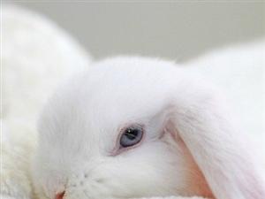 呆萌小白兔,有没有迷到你!!!呆萌兔纸,快到碗里来。