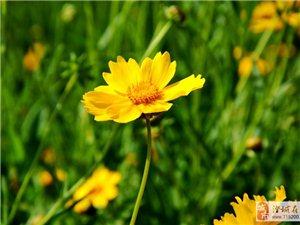 盛�_的花��