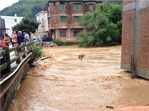 暴雨袭击,中和街就快要上水了