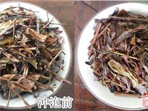 长期大量低价供应饮用型乌龙茶/凤凰单丛茶头适合工厂、家庭自用
