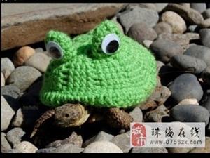 当乌龟遭遇钩针达人...