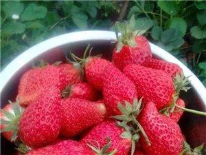 让你流哈拉的草莓