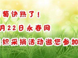 葡萄快熟了,6月22日永春网第二期组织采摘活动邀您参加