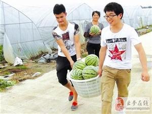 图文:返乡大学生种植西瓜喜获丰收