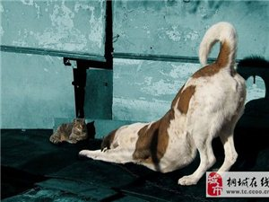 狗狗的肢体语言表达什么?