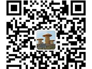 《金沙网站微生活》微信公众平台开开放