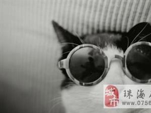 眼镜是斯文狗狗耍帅的必备品!