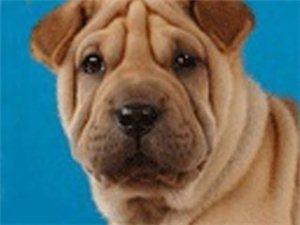 爱狗有理,吃狗无罪,今天你吃了吗?