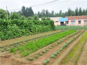 宾县水务局变成了农家小菜园