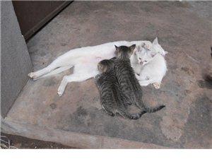 咪咪 家里猫咪实拍