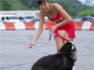单身的女人可不要轻易养大狗呀