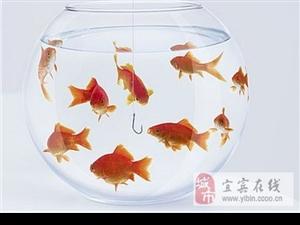 """风水大师:居家养鱼的""""催财""""大法"""