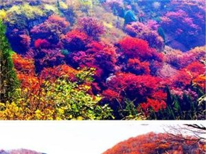 蛟河【秋天童话―红叶谷】