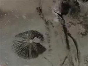 """蝴蝶兰""""成精""""印在水盆里"""