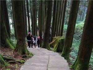 游台湾阿里山神木景点随拍