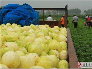 热烈庆祝《建平甜瓜产业协会》荣获国家级奖补的农村专业技术协会