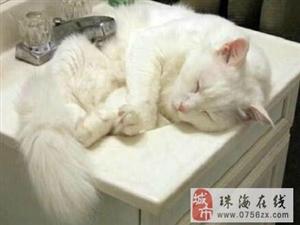 猫好像都好喜欢洗手盆