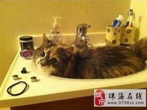 �好像都好喜�g洗手盆