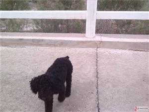 寻求走失的小狗狗