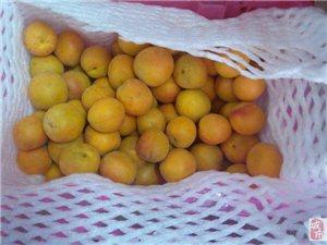终于吃到了正宗新疆葡萄,还有杏子,快来围观我