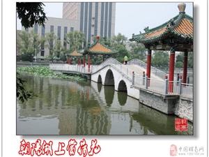 赏荷朝阳湖