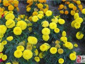 瓜州街头公园绚丽多彩的花儿