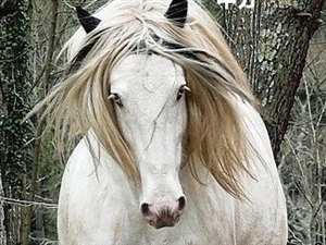 马年,作为一匹杀马特,发型是很重要的!