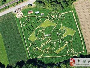 德国一农户用自家农地建造世界杯迷宫