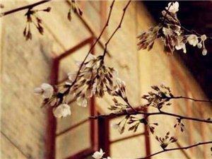 刘婕 给自己开一扇乐观的窗户