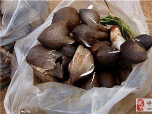 舌尖上的金沙网站——美味的菌类