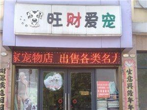 桐城旺财爱宠狗狗展示