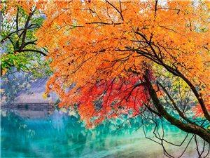 唯美红叶自然桌面壁纸 2560x1600 【10P】