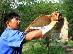 澳门大发游戏网站杨林村民放飞猴面鹰