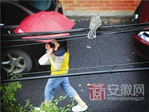 安徽今年8月目前很凉快19日后秋老虎仍可能杀来