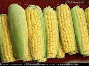 玉米吃不完怎么保存?
