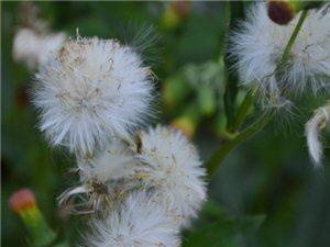 �o物花卉