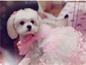 赛雯的公主装