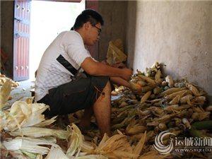 牛泽宇在帮家里剥玉米皮