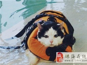 13岁的Holly是一只体重超过9公斤的超级肥猫