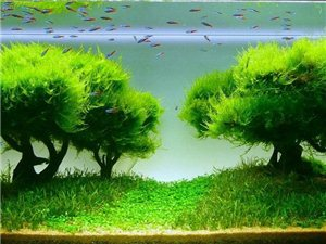 武威首家全景生态水族店