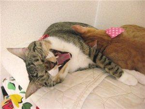 萌猫搞笑瞬间