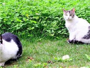 城里的流浪猫