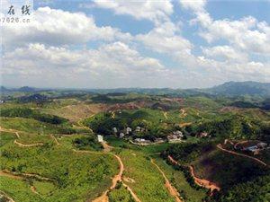 龙川县红肉火龙果种植基地航拍图